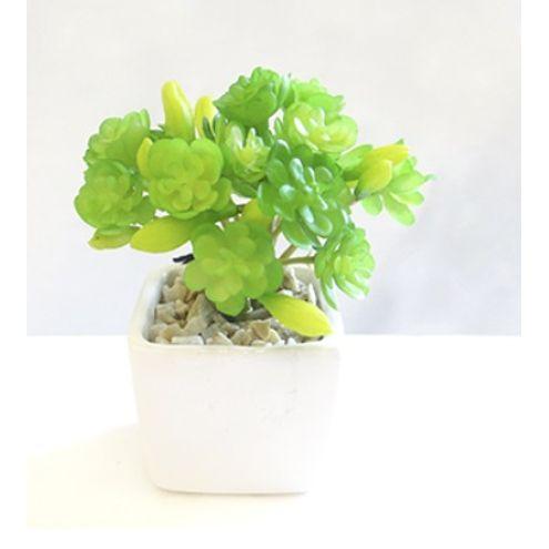 Arranjo Suculenta em Pote 10cm Verde