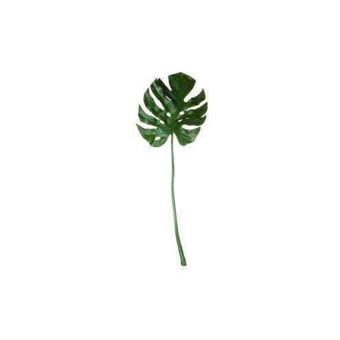 Folha de Philodendron Verde