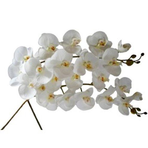 Orquidea Laleia Branca